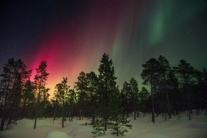 northern lights trees nelly-volkovich